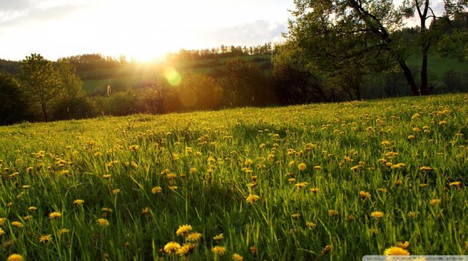 Spring Meadow Wallpaper 960×540